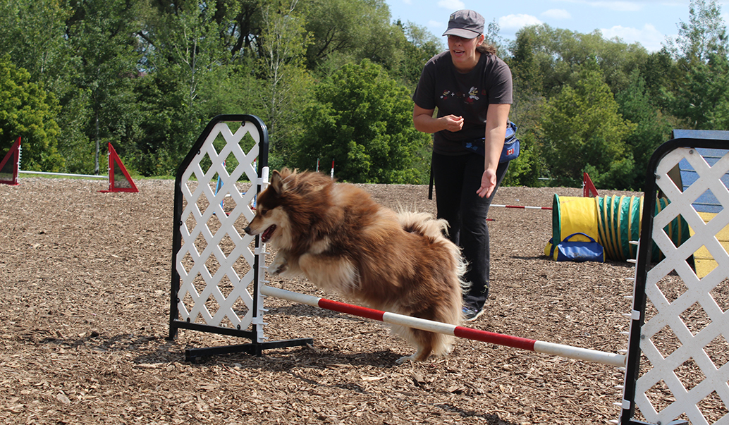 Dog Agility Classes